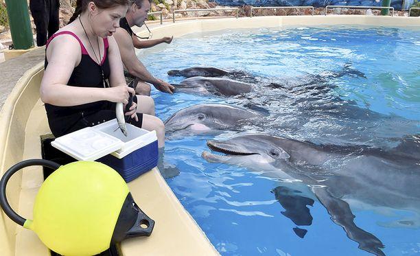 Särkänniemen delfiinit siirrettin Kreikkaan elokuussa 2016. Alkuun delfiineillä oli mukanaan kolme suomalaista kouluttajaa ja kaksi eläinlääkäriä. Kuvassa etualalla Sari Järvisalo ja Veera.