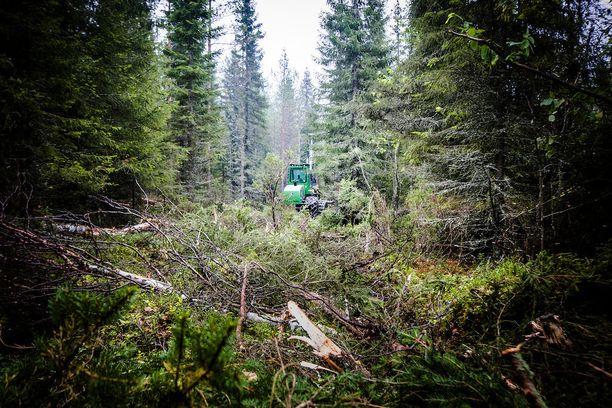 Suomen luonnonsuojeluliitto antaa hallitukselle arvosanaksi 6-. Liitto paheksuu erityisesti hallituksen biotalouspolitiikkaa.