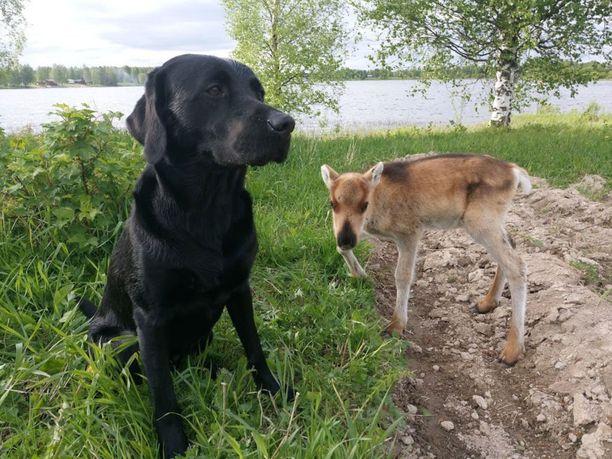 Myös Neo-koira kuuluu Taavin kavereihin.
