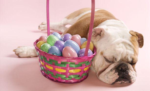 Lemmikeille pääsiäisen herkuissa ja koristeissa on monta vaaran paikkaa.