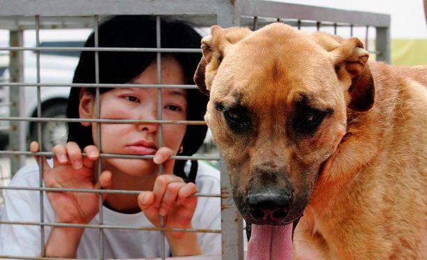 Etelä-korealainen eläinoikeusjärjestö protestoi koiranlihan syömistä vastaan Seongamissa.