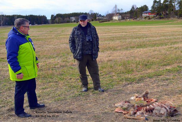 Mauri Ikonen ja petoyhdyshenkilö Seppo Lundgren tutkivat peuran raatoa torstaina.