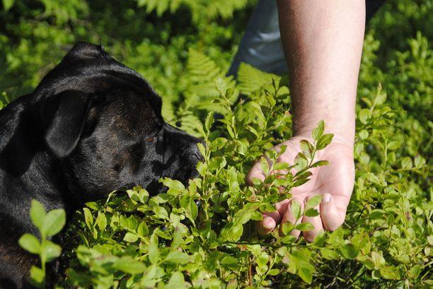Metsässä vaaniviin punkkeihin on koiria varten monenlaisia karkotteita, mutta toistaiseksi ihmisten käyttöön ei ole innostuttu kehittämään samanlaisia.