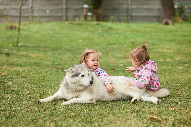 Yksi syy tutkimustulokseen voi olla, että koiranomistajat ovat liiankin luottavaisia. He luottavat siihen, että koira on ystävällinen ja jättävät koiran hermostuneisuutta osoittavat eleet huomiotta.