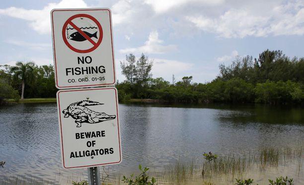 Alligaattorit ovat Floridassa hyvin yleisiä.