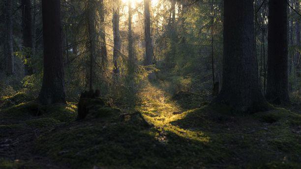 Onnellisuusoppaan johdolla pääsee esimerkiksi samoilemaan metsissä. Vaihtoehtoina on esimerkiksi Nuuksion kansallispuisto tai Sodankylän seutu.