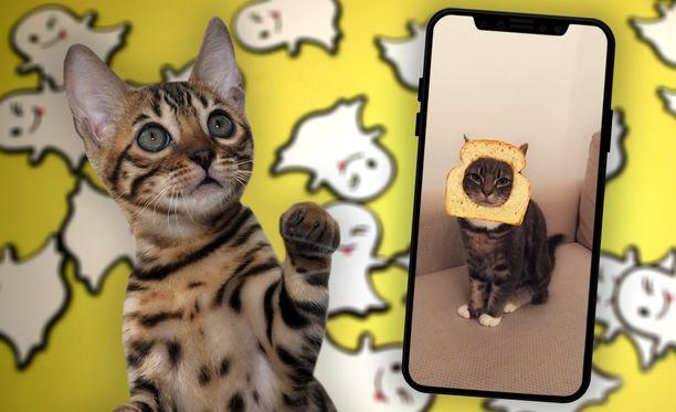 Snapchat tunnistaa nyt myös kissojen kasvot.