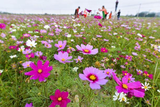 Kiinalainen luonnonpuisto kukkineen on keväisin suosittu ulkoilupaikka.