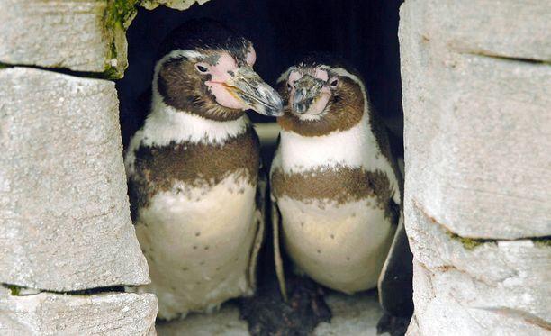 Dottyn ja Zeen sukuopuolet paljastuivat vuoden 2005 tutkimuksissa.