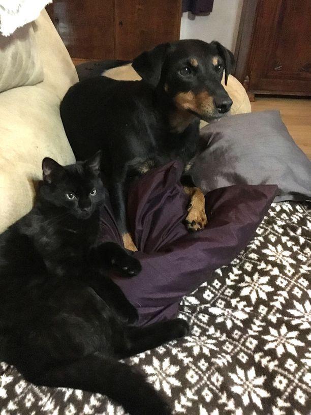 Yhdeksänvuotias Elsa-koira sai lokakuussa kaverikseen Dali-kissan. Totuttelua kesti viikon verran. Sitten alkoivat yhteiset leikit.