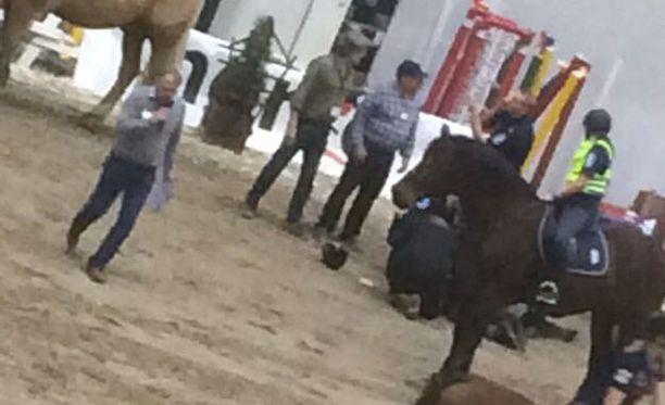 Ratsastaja loukkaantui, kun hän jäi hetkeksi hevosen alle.
