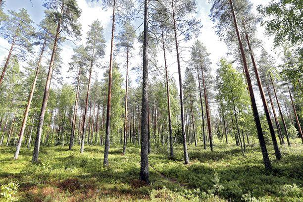 Mies oli kaivanut itselleen asumiskelpoisen maakuopan parin kilometrin päähän Oulun keskustasta. Kuvan paikka ei liity tapaukseen.