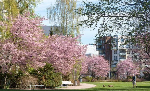 Suomalaisia hellitään aurinkoisella ja lämpimällä säällä myös maanantaina, kertoo Ilmatieteen laitos.
