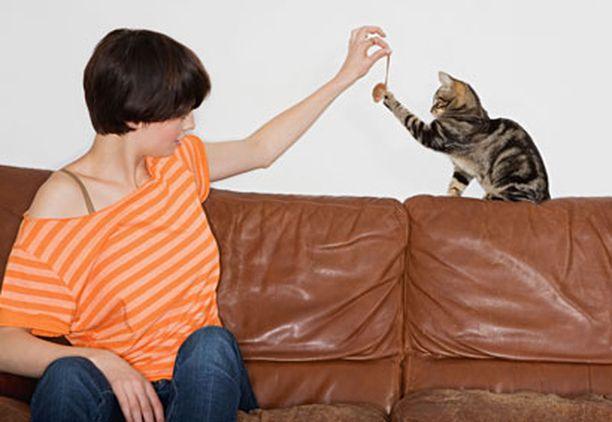 Sinkkuihmisten kissat saavat paljon kaipaamaansa huomiota.
