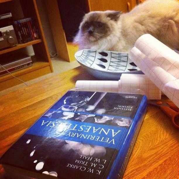 Raimo vihaa kirjojen päällystämistä.