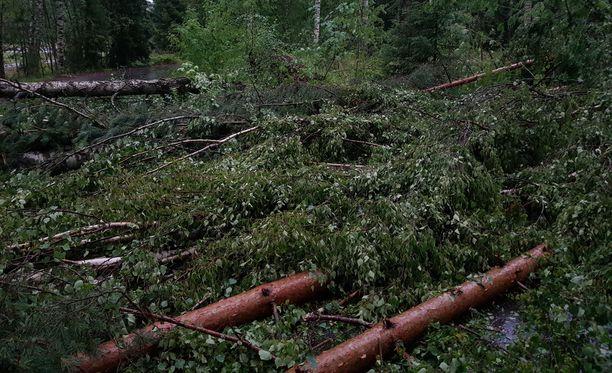 Kaatuneita puita Tuusulassa.