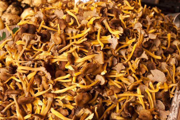 Sienet kuuluvat syksyn herkkuihin.