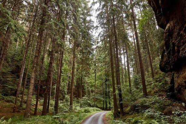 Naisen jäänteet löytyivät jyrkästä rinteestä saksalaisesta metsästä. Kuvituskuva.