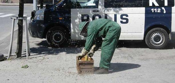 Mehiläistenhoitaja Heikki Lehtimäki kävi korjaamassa talteen komean saaliin.