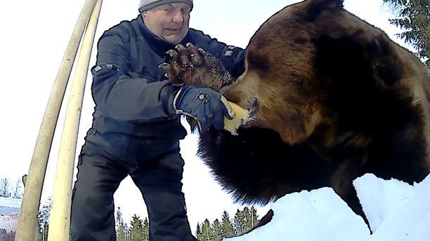 Juuso-karhu maisteli hunajaa talviunilta heräiltyään.