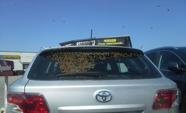 Kymmenet mehiläiset olivat laskeutuneet takalasille.