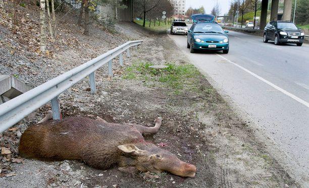 Liikennevakuutus korvaa hirvikolareiden ihmisvahingot. Auton vaurioita varten tarvitaan lisävakuutus. Laajennettu vakuutus on syytä olla myös silloin, kun ajaa eläintä väistäessään ulos.