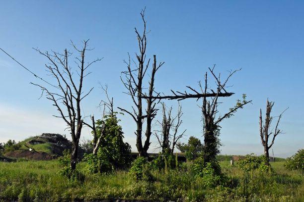 Raskaan tulituksen jäljiltä myös puut ovat silpoutuneet.