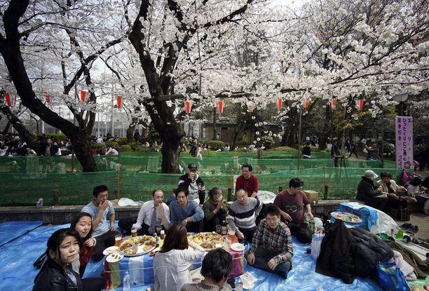Lounas kirsikankukkien alla Tokion Ueno-puistossa.