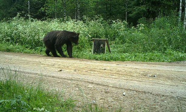 Lopulta karhu keksi keinon, jolla pelottavasta kuvajaisesta pääsee eroon: se kaatoi peilin kumoon.
