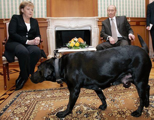 Vuonna 2007 Putin toi Konni-koiransa mukaan tapaamiseen Angela Merkelin kanssa, vaikka Merkel pelkää koiria.