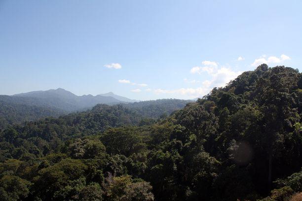 Kolmekin päivää viidakossa pistää pohtimaan ihmisen ja luonnon suhdetta uudelleen.