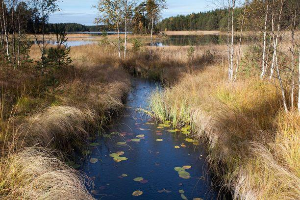 Teijon kansallispuisto tarjoaa niin järvimaisemia kuin merenrantaakin.