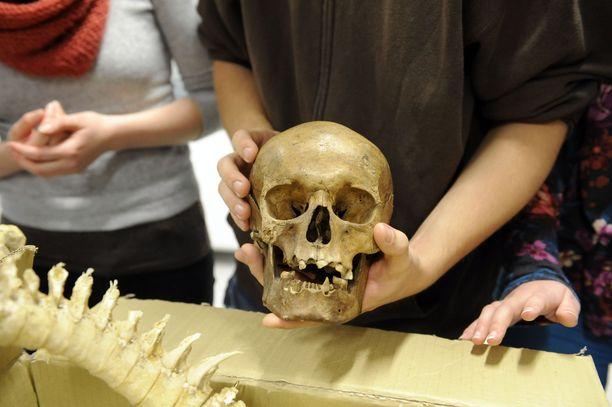 Ihmislajin kehityshistoria voi olla monimutkaisempi kuin aikaisemmin on luultu.