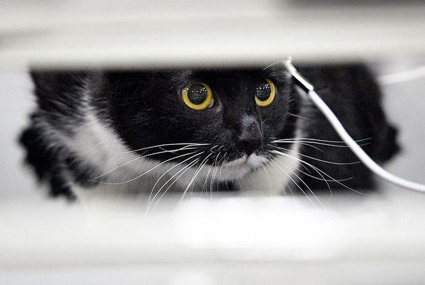 Riita kissasta johti traagiseen loppuun. (Kuvituskuva)