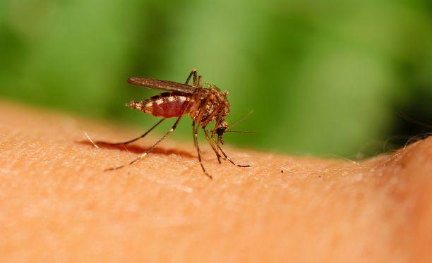 Zikaviruksen aiheuttama tauti on useimmiten lievä tai jopa oireeton. Tartunta voi aiheuttaa kuumetta, ihottumaa, nivel- ja lihaskipuja sekä silmätulehdusta. Kuvituskuva.
