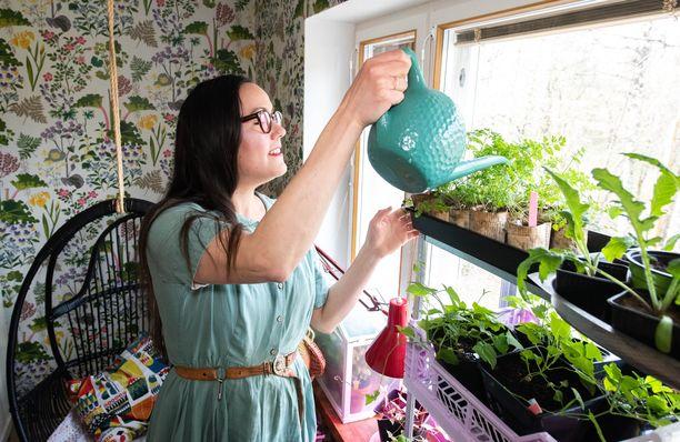 Hanne Valtari esikasvattaa parvekkeelle tulevia kasveja itse. Keväisin ikkunalaudat pursuavat taimia.