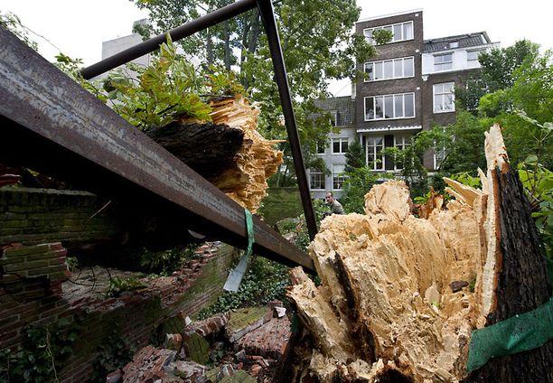 Myrsky oli liikaa 150-vuotiaalle kastanjapuulle.