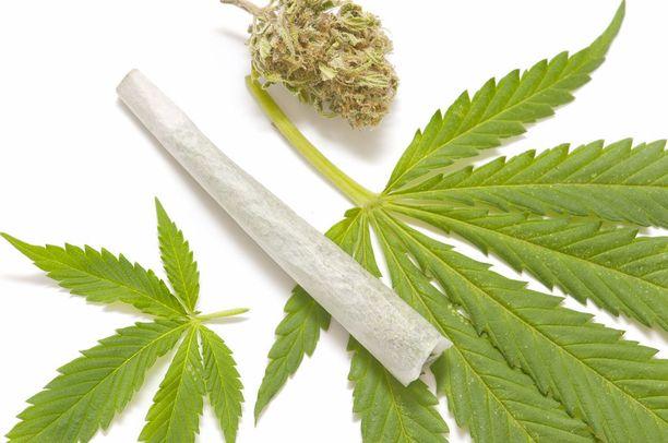 Lääkekannabis ei ole samanlaista kuin viihdekäyttökannabis. Molempiin liittyy kuitenkin riskejä.