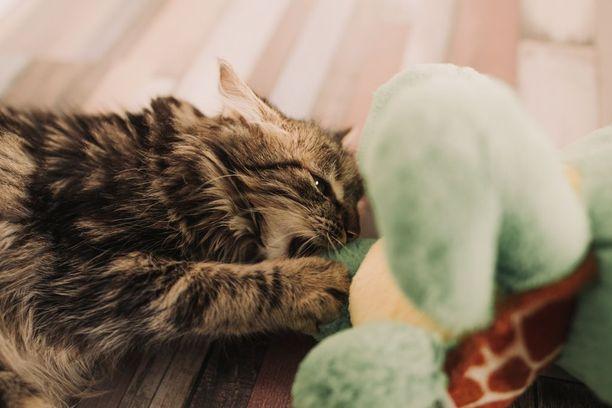 Jos kissa on enemmän leikkimis- kuin silitystuulella, ei se välttämättä jaksa kovin pitkää silityssessiota.