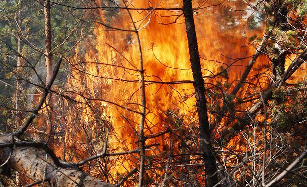 Metsäpalot riehuvat nyt ympäri Suomea. Arkistokuva.