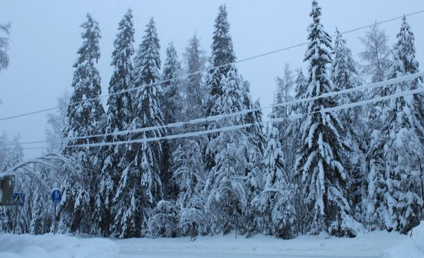 Tykkylumi kuormittaa puita, joiden oksat painuvat sähkölinjoille. Kuvituskuva.