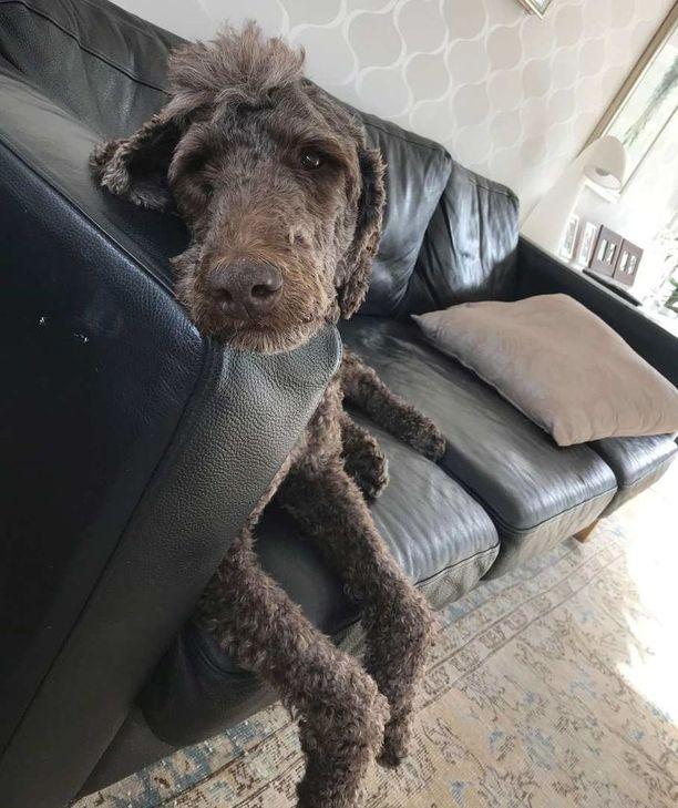 Häpi-koiraa etsittiin neljä viikkoa yötä päivää.