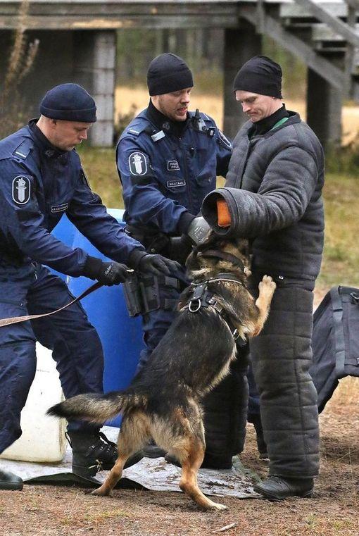 Kreo Lauri Kärsämänojan ohjauksessa suojelukokeessa.