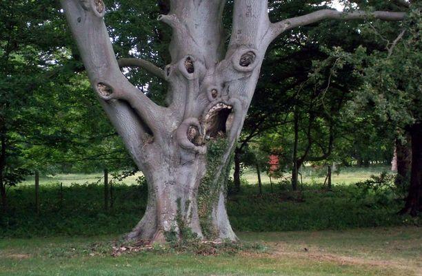 PELOTTAVA Tähän puuhun et haluaisi törmätä pimeällä kujalla.