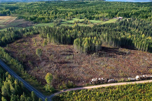 Suomessa hakattiin viime vuonna metsää enemmän kuin koskaan aikaisemmin. Samalla niiden muodostama hiilinielu pieneni huomattavasti. Kuva hakkuuaukealta Ruovedeltä.