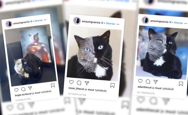 Narnia-kissaa seuraa Instagramissa 240 000 ihmistä.
