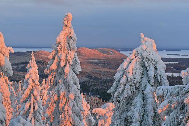 Tammikuun aamu Kolilla. Kansallispuisto on yksi Suomen suosituimmista.
