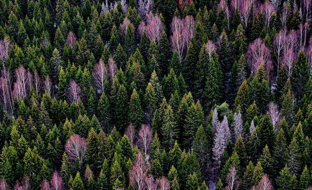 Tutkimuksen mukaan kasvillisuuden kasvu on kiihtynyt ilmastonmuutoksen ja ilman nousseen hiilidioksidipitoisuuden myötä.