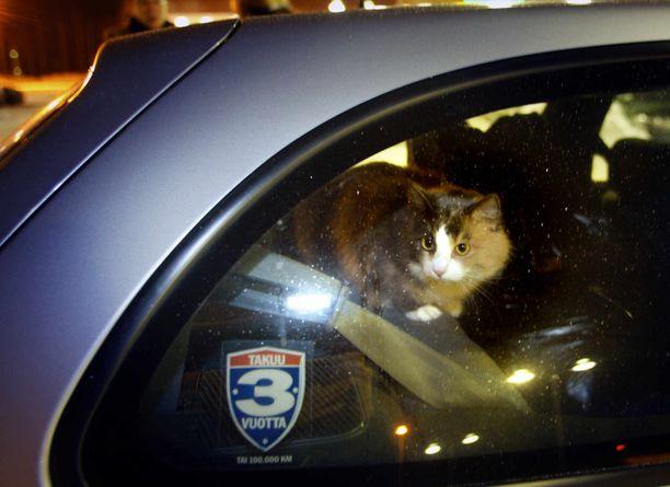 Kissoja ja koiriakin on löytynyt takseista.