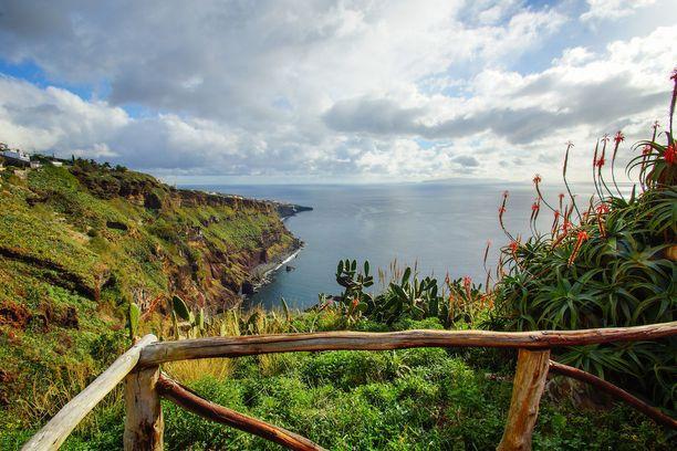 Madeiralla voi ihailla upeaa kukkaloistoa.